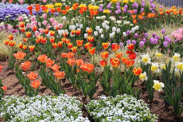信州花フェスタに行ってきました。